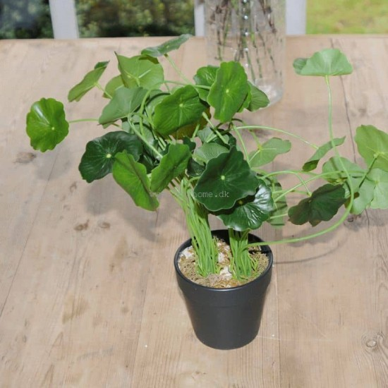 Kunstig Navel 34cm - Kunstig plante