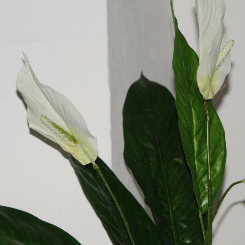 stueplante med hvide blomster