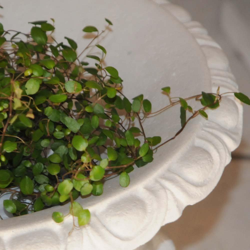 Glimrende Marmor Blomster væg potte - 30cm høj - BL754 BL754 SK-07
